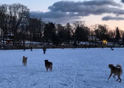 Dogs walking across a frozen Gorham's Pond